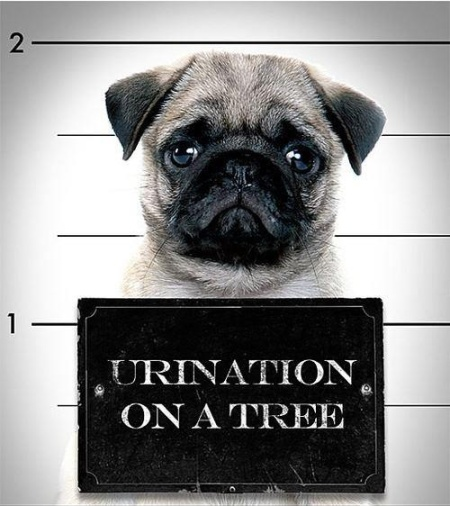 Image result for free blog pics of dog mug shots
